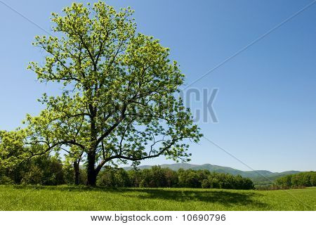 Tree Framed Meadow