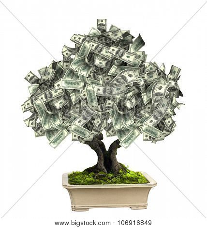 3d money tree with dollar banknotes. Isolated on white background
