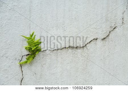 fern on vintage wall, Fern background and empty area for text, Nature on white background.