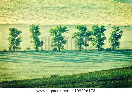 Vintage retro effect filtered hipster style image of Moravian rolling landscape with trees in early morning haze. Moravia, Czech Republic