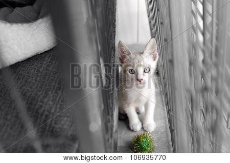 Shelter Animal