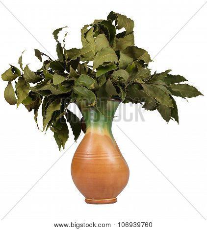 Bay Leaf Branches In A Vase