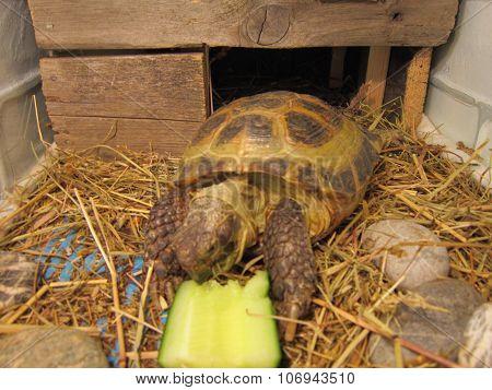 Turtle overland