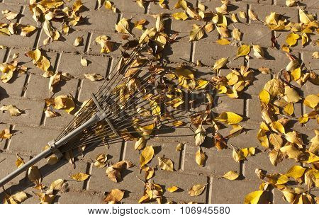 Fallen Leaves And Rake On Pavement.