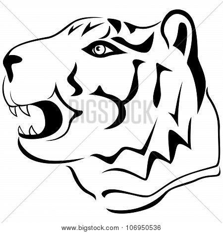 Adult Tiger Head Profile