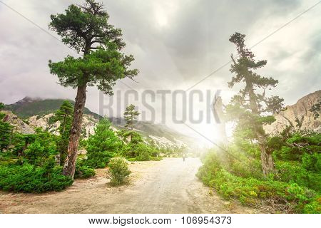 rural road and green trees in mountains with cloudy sky in Nepal, Annapurna trekking