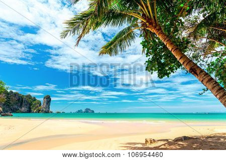 palm trees on tropical beach and blue sky with white clouds in Krabi province, Thailand