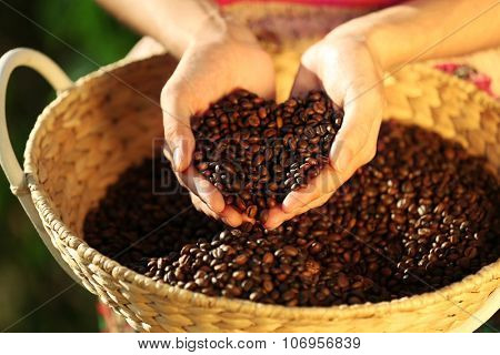 Coffee beans falling from hands onto wattled basket