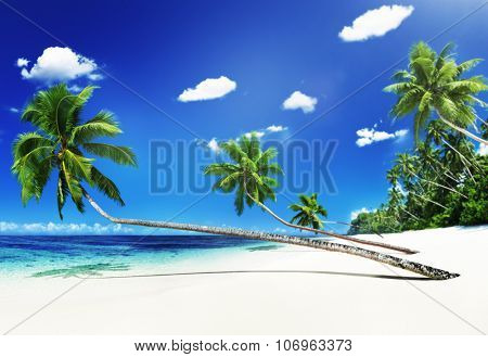 Scenic View Sea Shore Sand Coconut Palm Trees Concept