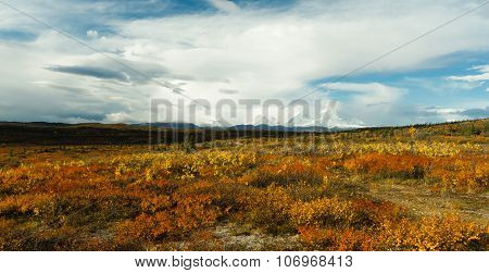 Plants Ground Cover Change Color Alaska Mountains Autumn Season