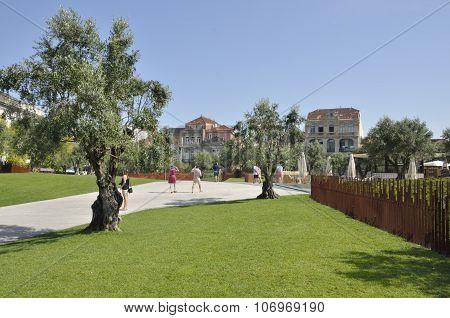 Garden Of  Plaza Of Lisbon
