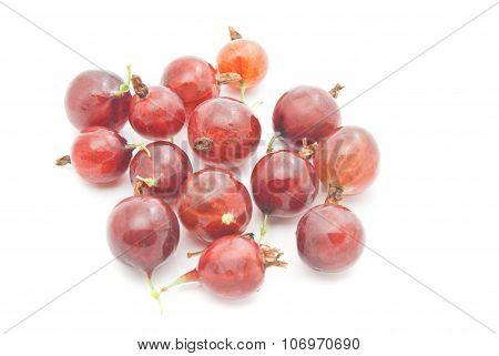 Many Tasty Red Gooseberries