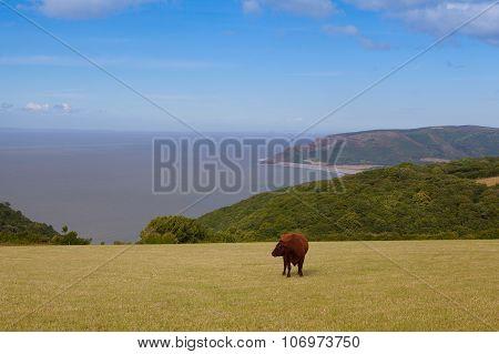 On The Pasture In Devon