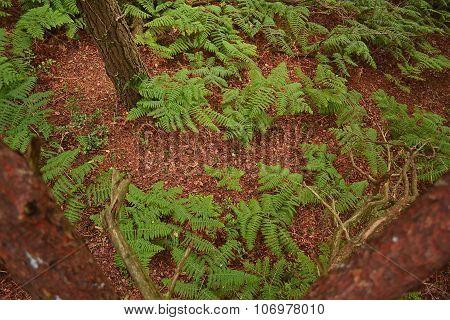 Ferns below