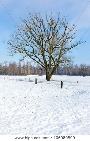 Snowy Winter Landscape With Bare Tree And Blue Sky