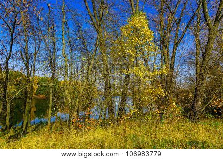 Autumn Nature With Branchy Trees By Lake