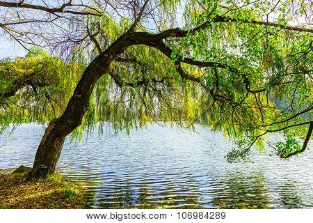 Tree Growing By Lake