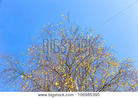 Branchy Tree Against Sky