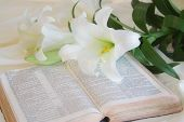 stock photo of easter lily  - easter lily and bible laying on a table - JPG