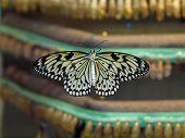 Butterfly Hatchery poster