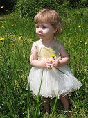 foto of flower girl  - Little girl picking dandelions - JPG