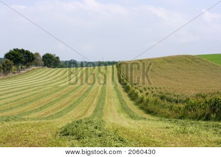Harvest Patterns In The Field