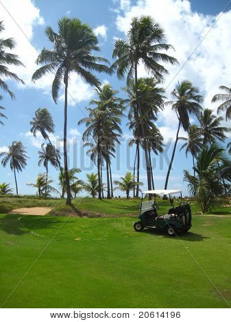 Palm trees on luxury golf course