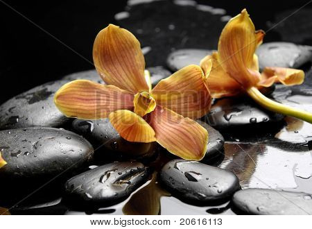 still life with branch orange orchid on pebble in water drops