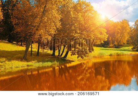 Autumn landscape. Yellowed autumn trees near the river in sunny autumn weather. Sunny autumn landscape with autumn trees and forest river. Forest autumn background. Golden autumn trees near the river picture