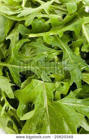 Salad Mizuna