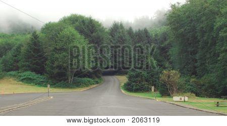 Roadway Enter Forest
