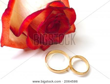 Rose And Two Wedding Rings