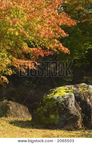 Autumn Rocks Corner