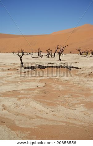 Dead Vlei at Namib Desert