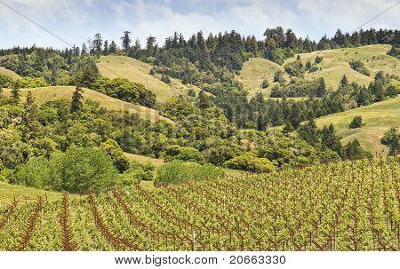 Wine Country, Horizontal