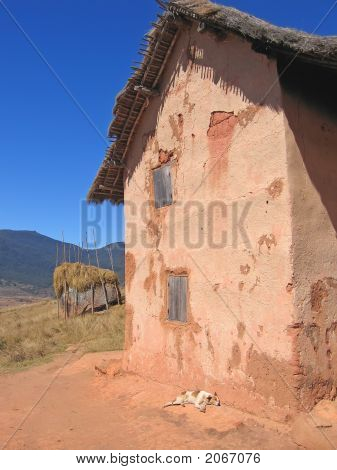 Dog Sleeping Along A House