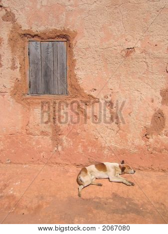 Dog Sleeping Along A House Wall,
