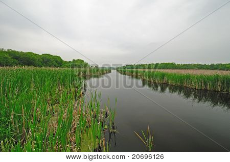 Marshland On A Misty Day
