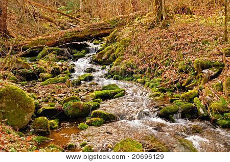 A Small Creek In The Spring