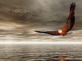 Accipitridae, American Bald Eagle.