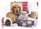 Christmas dog and cat poster