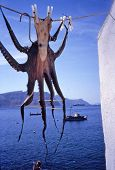 pic of ouzo  - octopus in holidays in a tavern at the santorini with nice blue background - JPG