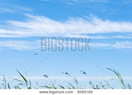 Windy Rural Landscape