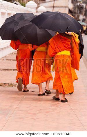 Young monks in Luang Prabang, Laos