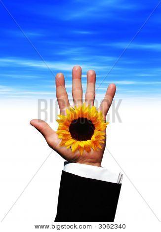 Sunflower Hand
