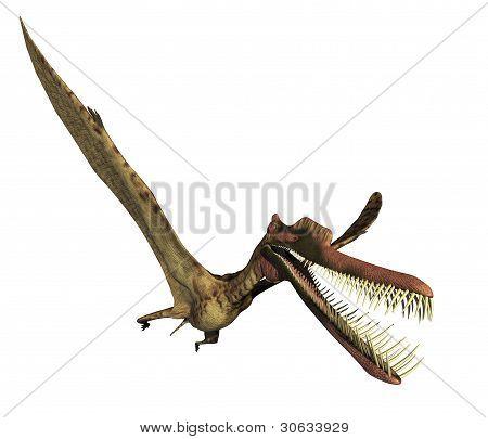 Zhenyuanopterus dinossauro 2
