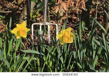 Spring clean in the garden