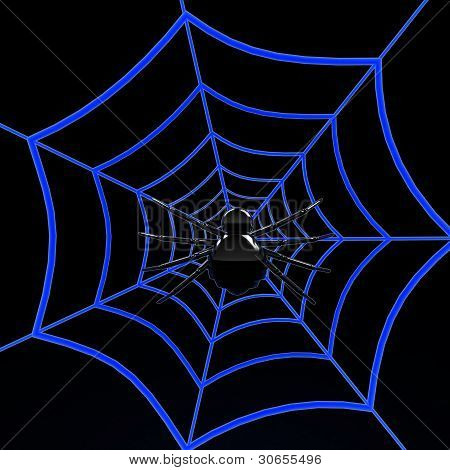 Black spider on blue web