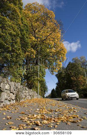 Car In Autumn