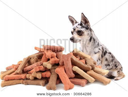 Pug And Dog Buiscuit Treats